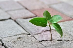 sidewalk-sprout